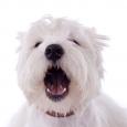 no bark dog collar