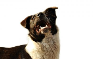 stop prevent dog barking
