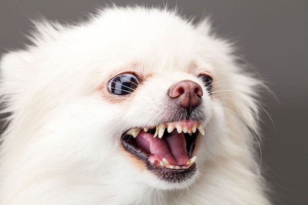 bark collar for hairy dogs