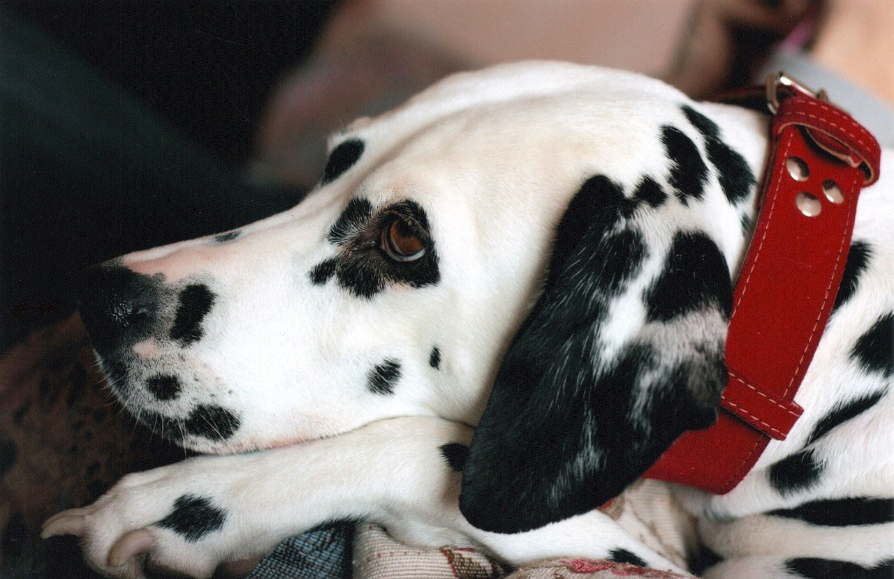 Dog Tracking Collars: Assist You Find Your Pet